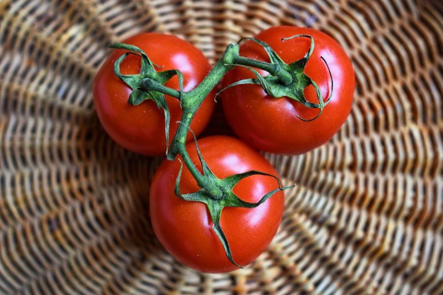 עגבניה לכלב
