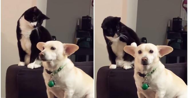 חתול מרושע